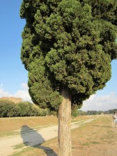 The endpoint Cypress tree