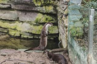 Mal wieder im Kölner Zoo