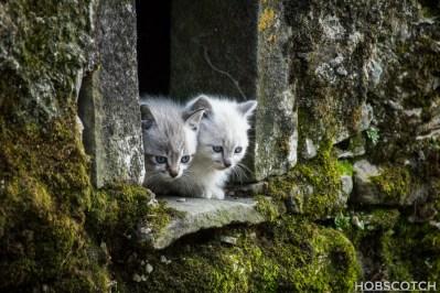 Katzenbabys aus Italien