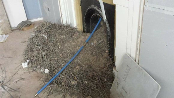 A huge nests removed by hodgsons chimney sweeps in devon