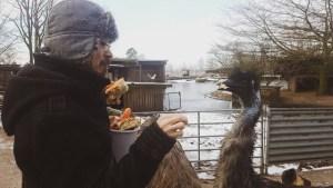 """Emu Fütterung Tierpark """"Cux-Art"""""""