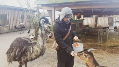 """Fütterung im Tierpark """"Cux-Art"""""""