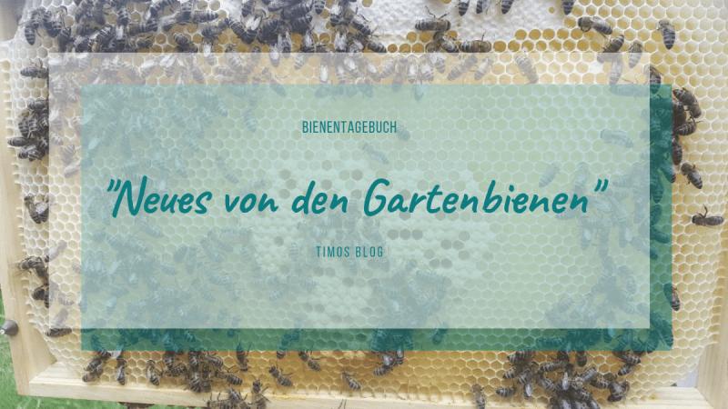 Bienentagebuch Gartenbienen