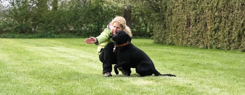 Field Trail - Ein sinnvoller Spaß für Hund und Halter