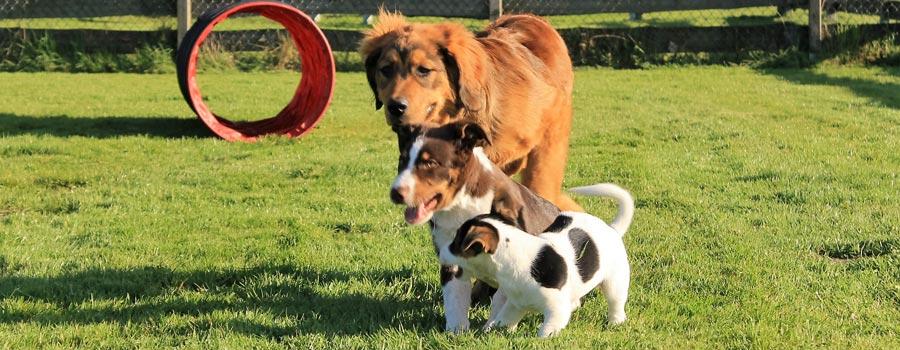 Welpengruppe - Hier erlernt der Hund ein ausgeglichenes Sozialverhalten