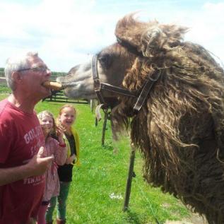 kameel voeren