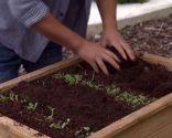Huerto urbano y ecológico en mesas de plantación - Paso 2