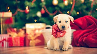 Why not give pets at Christmas