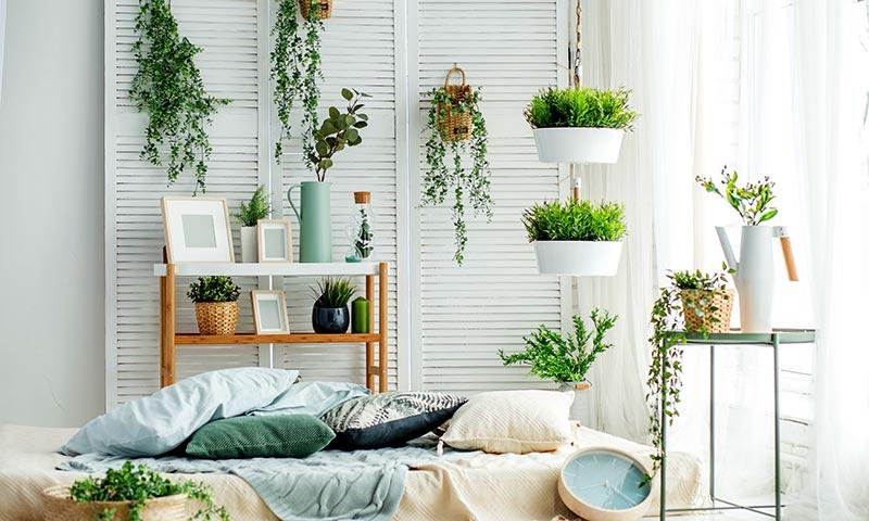 Resultado de imagen de Plantas en el hogar