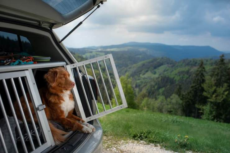 A dog traveling in a carrier