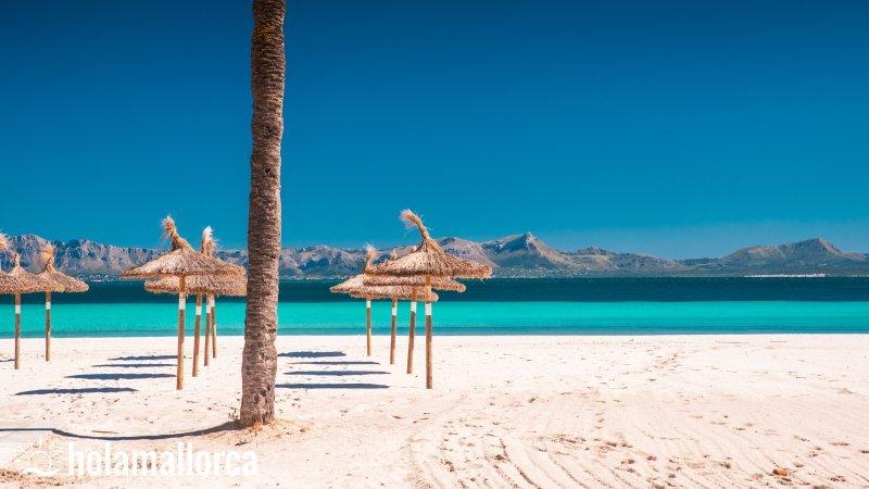 playa de alcudia langster strand auf