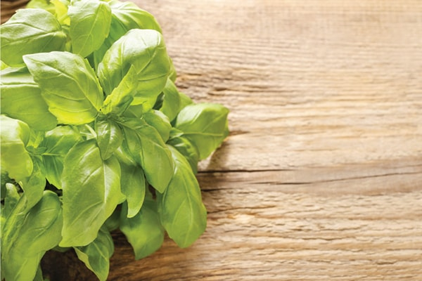 Holar - Blog - Top 10 Essential Herbs, Spices, and Seasonings for Your Kitchen Pantry - Basil