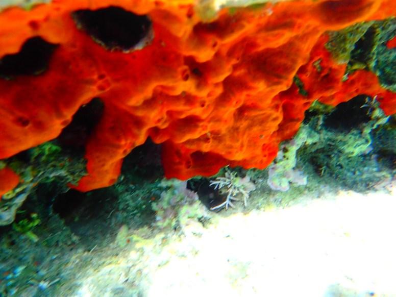 Snorkeling-on-Crete