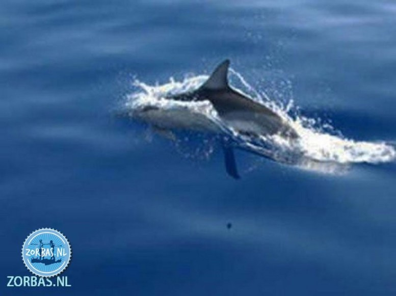 Seeing dolphins during boat trip
