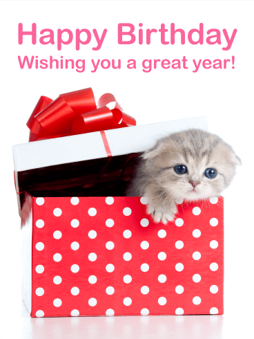 Cute Kitten Birthday Card Birthday Amp Greeting Cards By Davia