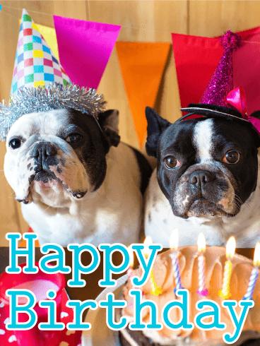 Two Birthday Dogs Animal Birthday Card Birthday