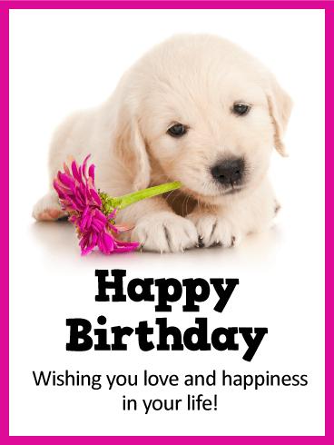 Sweet Puppy Happy Birthday Card Birthday Amp Greeting
