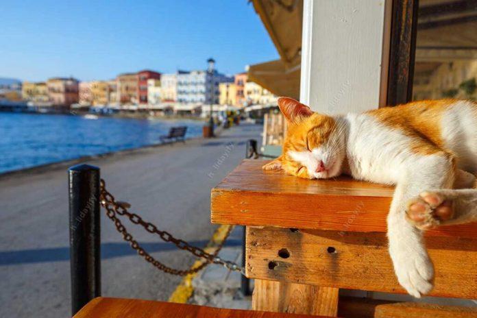 Sleeping Cat in Chania Crete