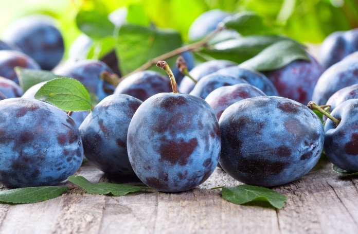 The plums of Skopelos