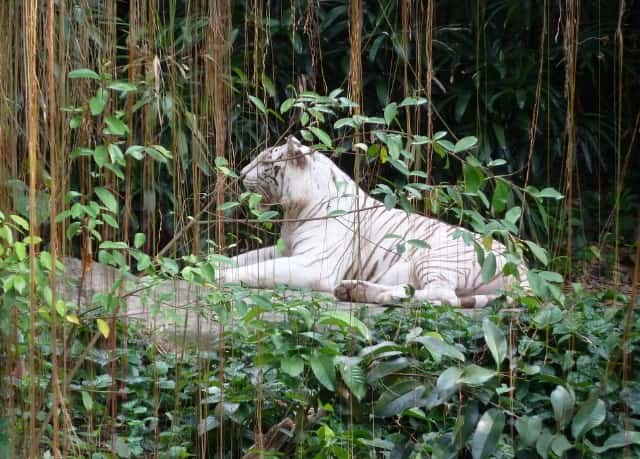 Singapore Zoo Place To Visit In Singapore