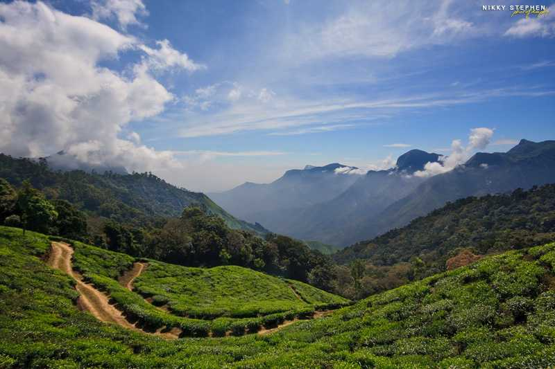 Top 25 Places to visit in August in India   Mid Monsoon Trips Munnar  Places to visit in August in India