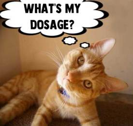 CBD For Cats Dosage