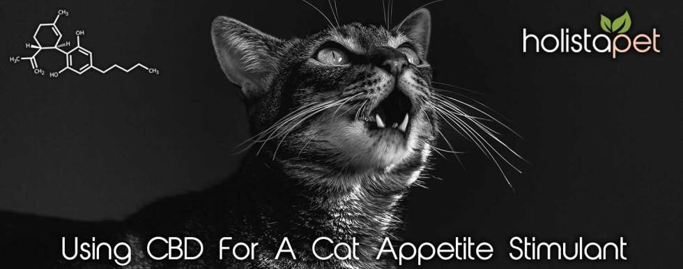 CBD for cat appetite stimulant