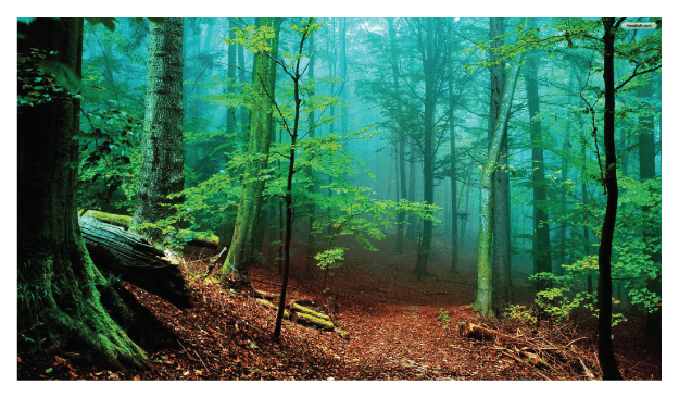 green forest Forest Bathing