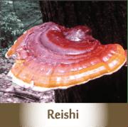 reishi2