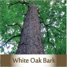 white-oak-bark2