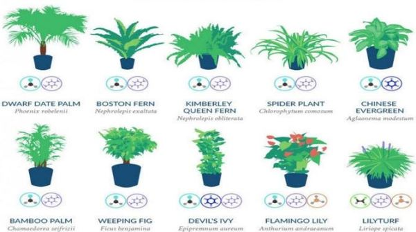 12 Plants Approved by NASA That Promote Better Sleep, Lung ...