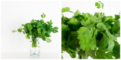 Cilantro. A delicious fresh herb used in Mexican and Thai cusine.