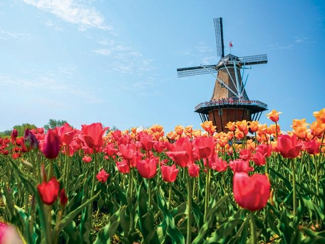 Design Landscape Mi Holland