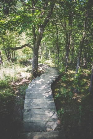 boardwalk-trees-pexels-photo-31273