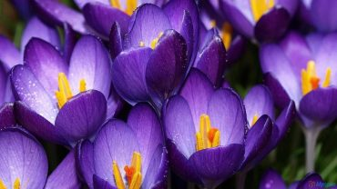 How to get months of colour in your garden for next to nothing