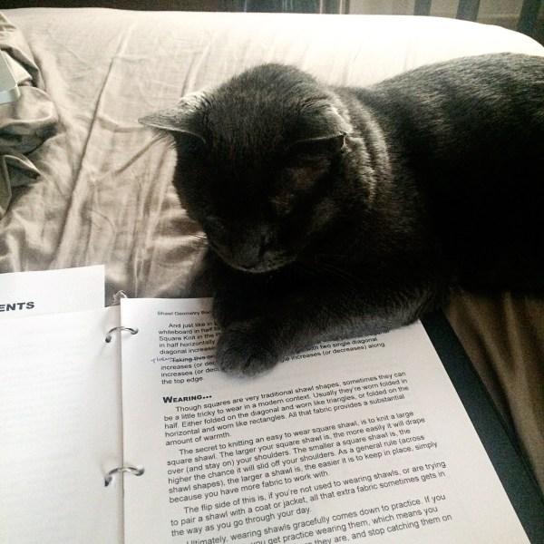 cat editing a book