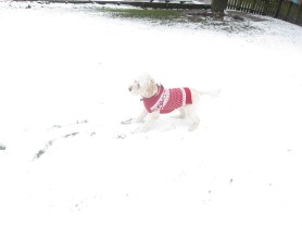 Poppy snow (4)