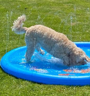 Poppy splash (1)