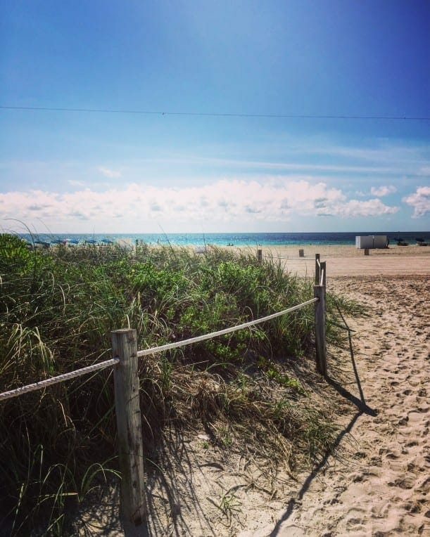 City partners with youth volunteers on hollywood beach dune restoration project april 27