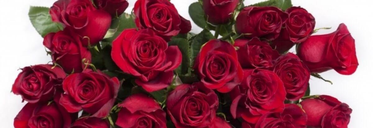josh-fox-isis-roses-hug
