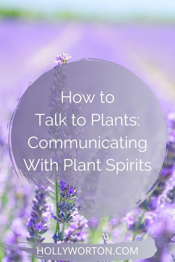 How to Talk to Plants: Communicating With Plant Spirits