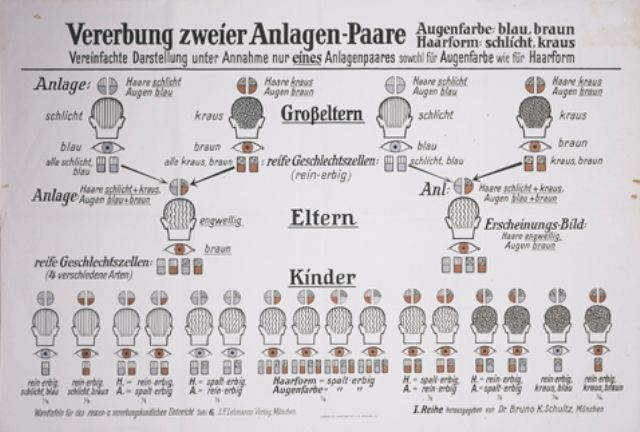 A eugenics chart entitled  -A eugenics chart entitled Hereditary traits passed down from two mates-