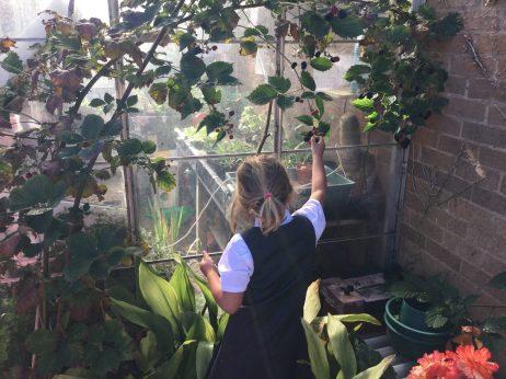 Eco Garden 4