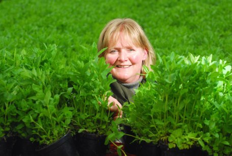 Food and drink PR of mint crop at Scot Herb in Dundee, destined for Mojito cocktails at Tigerlily Hotel