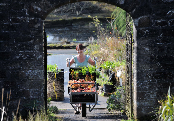 A female worker at Binny Plants with some of the 1000-plus plants being transported to the Inchmarlo estate to create a new rainbow feature in the world-renowned Deeside gardens