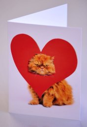 "For duos who have cute pet-names for each other and enjoy cuddling up on the sofa with a box of chocolates, Scribbler's stock of Avanti Cute Animal Cards are a purrrrfect purchase – retailing at £2.50. One card features a grumpy ginger cat with its head peering through a cardboard heart. The message inside reads: ""I really, really like you! Happy Valentine's Day""."