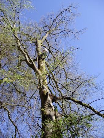 02 BAndirran Tree Climb (2)
