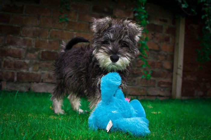 PR Experts blog post on Animal Day
