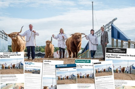 PR photos of cow flyover at Royal Highland Show
