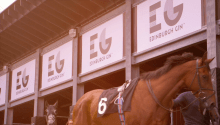 Race horses get ready seconds before racing at the Edinburgh Cup 2017 at Musselburgh Racecourse, sponsored by Edinburgh Gin./